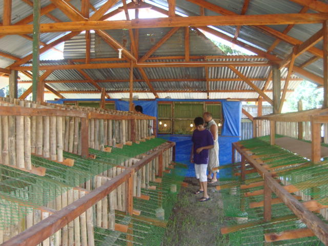 Ongoing Poultry Project – Wimler Foundation